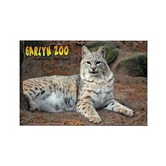 Bobcat Rectangle Magnet (10 pack)