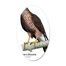 Coopers Hawk Oval Car Magnet