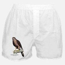 Coopers Hawk Boxer Shorts