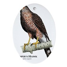 Coopers Hawk Oval Ornament