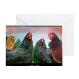 Chicken Greeting Cards