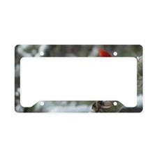 CA11.06x6.637 License Plate Holder