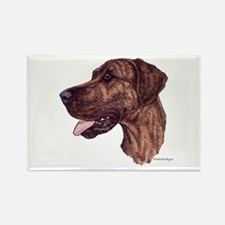 Brindle Dane Rectangle Magnet