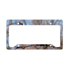 CW11.06x6.637 License Plate Holder