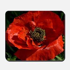 Vibrant Red Poppy Mousepad