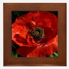 Vibrant Red Poppy Framed Tile