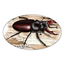 European Stag Beetle Decal