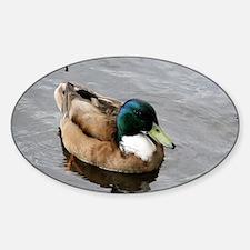 Duck Sticker (Oval)