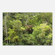Fenian Track near Karamea Postcards (Package of 8)