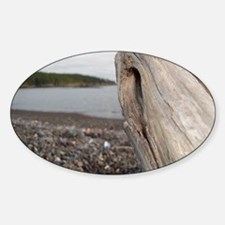Driftwood in Maine Sticker (Oval)