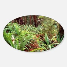 Akatore Forest near Taieri Mouth, O Decal