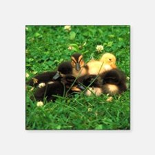 "ducklings Square Sticker 3"" x 3"""
