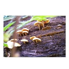 Fungi Postcards (Package of 8)