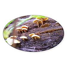Fungi Decal
