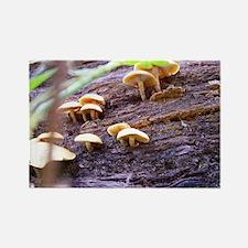 Fungi Rectangle Magnet