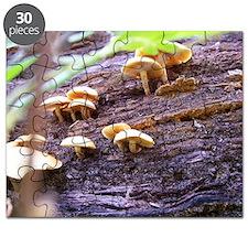 Fungi Puzzle