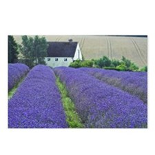 Snow Hill Lavender Farm Postcards (Package of 8)