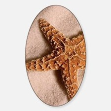 star fish 2 Sticker (Oval)