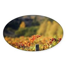 Rows of Pinot Noir Vines in Autumn, Decal