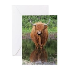 Standard Highland cow head on, Brock Greeting Card