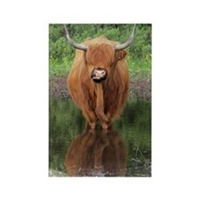 Standard Highland cow head on, Br Rectangle Magnet