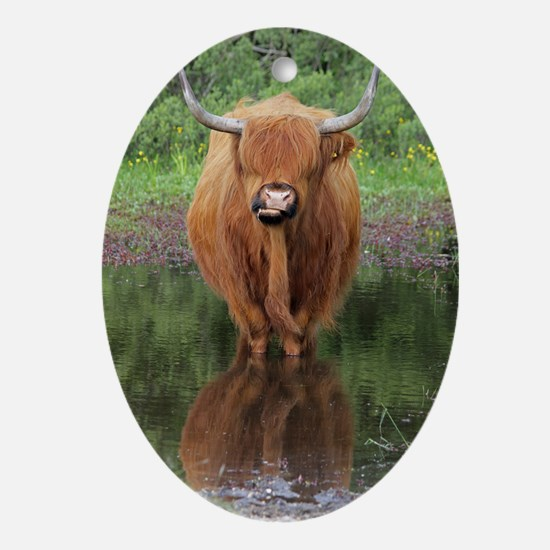 Standard Highland cow head on, Brock Oval Ornament