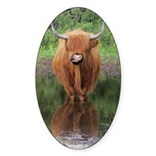 Standard Highland cow head on, Broc Decal