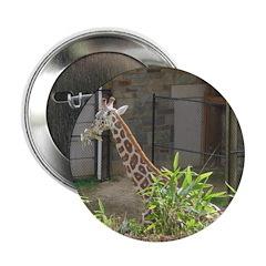 giraffe 12 2.25