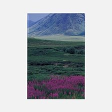 Yukon. Fireweed blooms at Black F Rectangle Magnet