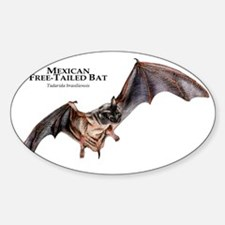 Mexican Free-Tailed Bat Decal