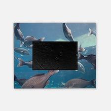 Aquarium inside Atlantis Resort, Nas Picture Frame