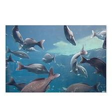 Aquarium inside Atlantis  Postcards (Package of 8)