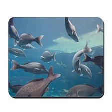 Aquarium inside Atlantis Resort, Nassau, Mousepad