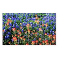 BLUEBONNETS AND PAINTBRUSH 1 Decal