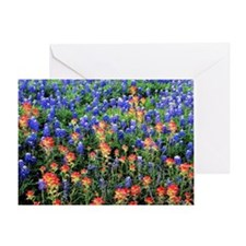 BLUEBONNETS AND PAINTBRUSH 1 Greeting Card