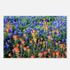 BLUEBONNETS AND PAINTBRUS Postcards (Package of 8)