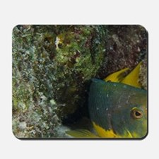 Spanish Hogfish (Bodianus rufus), Bonair Mousepad