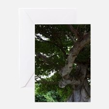 Viegues Island. View of ceiba or sil Greeting Card