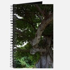 Viegues Island. View of ceiba or silk cott Journal