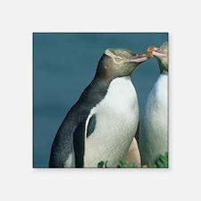 "Yellow-eyed Penguin, (Megad Square Sticker 3"" x 3"""