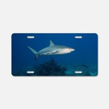 Caribbean Reef Sharks (Carc Aluminum License Plate