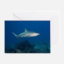 Caribbean Reef Sharks (Carcharhinus  Greeting Card