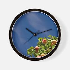 Apricot orchard, Bannockburn, Central O Wall Clock