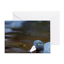 Karamea. Blue Duck (Hymenolanimus ma Greeting Card