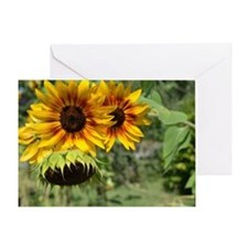 Sunflowers in Summer Greeting Card