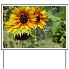 Sunflowers in Summer Yard Sign