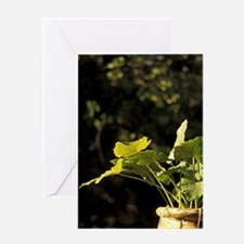 Hum Plantation in the gardens, Marti Greeting Card