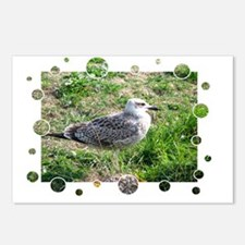 Seagull3 Postcards (Package of 8)