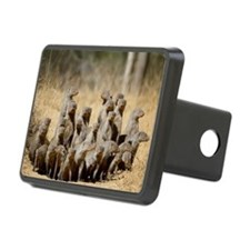Banded Mongoose-1 Hitch Cover