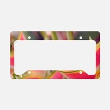 Heliconia (musaceae)Guadaloup License Plate Holder